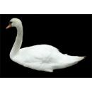 Swan N°01