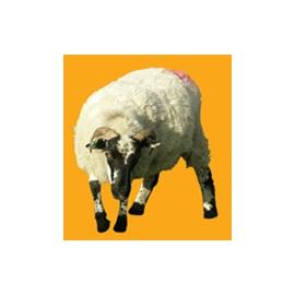 Ram N°02
