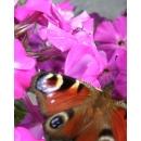 Butterfly N°01