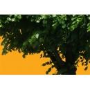 Tree N°24