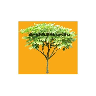 Tree N°46
