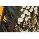 Wooden Logs Storing