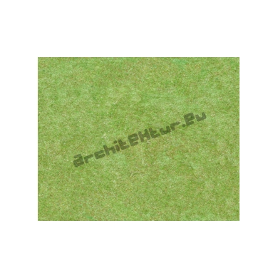 Grass N°01