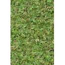 Grass N°03