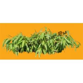 Bambou N°01
