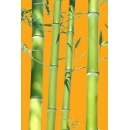 Bamboo N°04 canes
