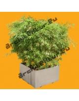 Bamboo N°05 Pot