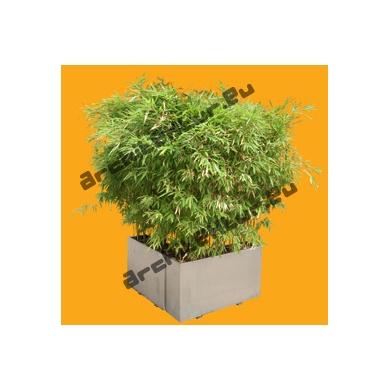 Bambou N°05 Pot