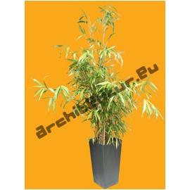 Bamboo N°06 Pot