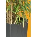 Bambou N°06 Pot