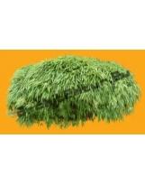 Bamboo N°08