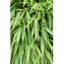 Bambou N°08