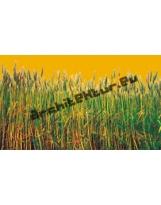 Wheat N°01