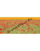 Red Poppies Field N°01