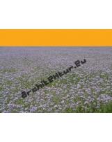 Field of flowers N°01