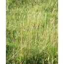 Background N°01 Meadow
