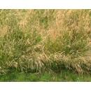 Background N°02 Meadow