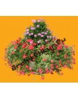 Geranium N°01 + Flowers