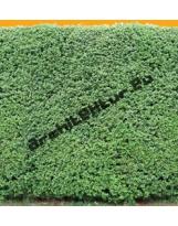 Hedge N°01