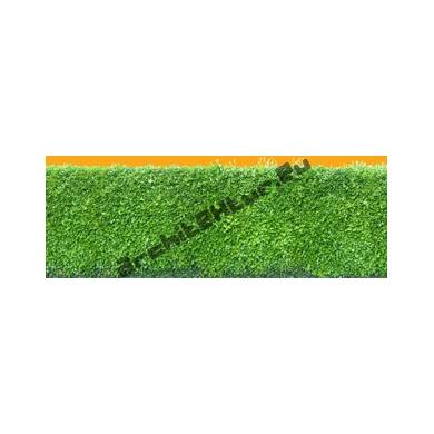 Hedge N°02