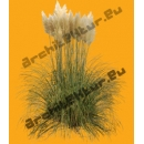 Pampa plant N°02