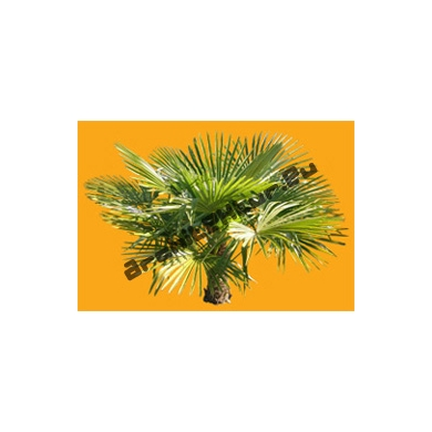 Small Palm Tree N°01