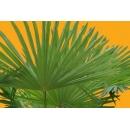 Small Palm Tree N°02