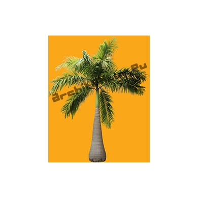 Palmier N°04 de Méditerranée