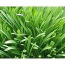 Plante N°01