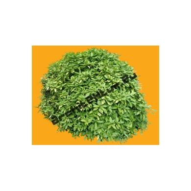 Plante N°02