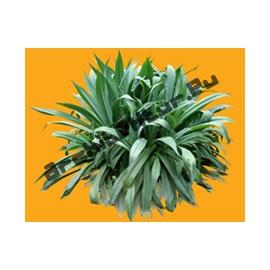 Plante N°03