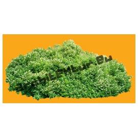 Plante N°05
