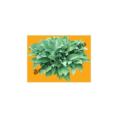 Plante N°07