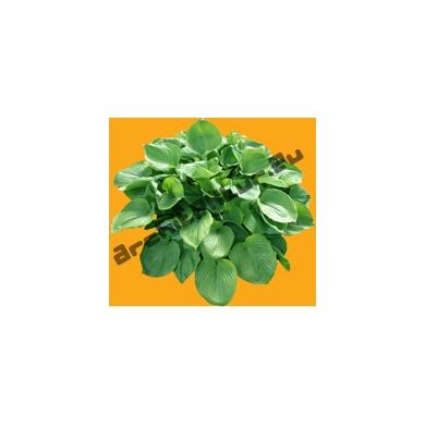 Plante N°08