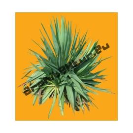 Plante N°09
