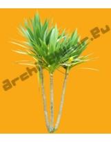 Shrub N°24 Yucca