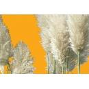 Pampa plant N°01