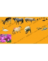 Pack textures : 9 Animals HQ