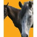 Horse N°01